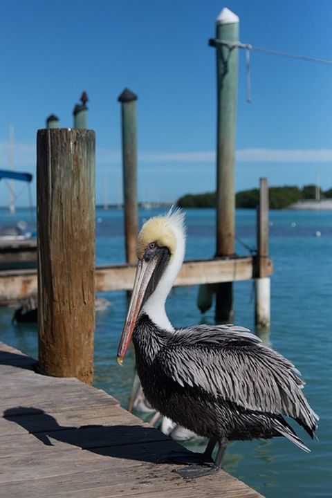 Ft Meyers and Englewood Boat Rental Rates   Bay Breeze